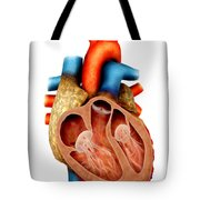 Anatomy Of Human Heart, Cross Section Tote Bag by Stocktrek Images