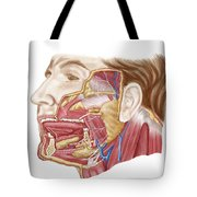 Anatomy Of Human Salivary Glands Tote Bag