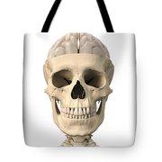 Anatomy Of Human Skull, Cutaway View Tote Bag by Leonello Calvetti