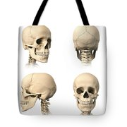 Anatomy Of Human Skull From Different Tote Bag