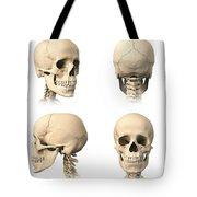 Anatomy Of Human Skull From Different Tote Bag by Leonello Calvetti