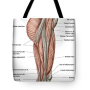 Anatomy Of Human Thigh Muscles Tote Bag