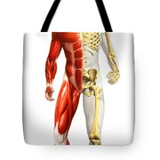 Anatomy Of Male Body With Half Skeleton Tote Bag