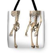 Anatomy Of Male Human Skeleton, Side Tote Bag