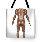 Anatomy Of Male Muscular System, Back Tote Bag