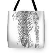 Anatomy: Spinal Nerves Tote Bag