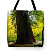 Ancient Old Growth Tote Bag