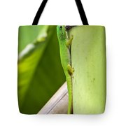 Andaman Day Gecko  India Tote Bag