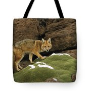 Andean Red Fox Altiplano Bolivia Tote Bag