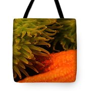 Anenome And Starfish Tote Bag
