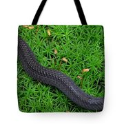 Anerythristic Red Belly Snake Tote Bag