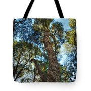 Angeles Sun -beautiful Tree With Sunburst In Angeles National Forest In The San Gabriel Mountails Tote Bag