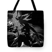 Angels Or Dragons B/w Tote Bag