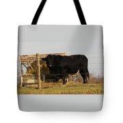 Angus Bull Tote Bag