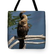 Anhinga Immature Tote Bag