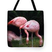 Animal - Flamingo - A Set Of Flamingoes Tote Bag