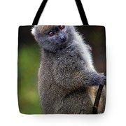 Animals 19 Tote Bag