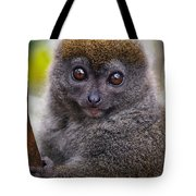 Animals 22 Tote Bag