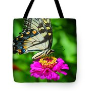 Anise  Swallowtail Butterfly Tote Bag