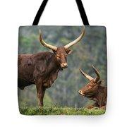 Ankole Longhorns Tote Bag