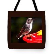Anna's Hummingbird On Perch Tote Bag