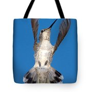 Anna's Hummingbird Tail Display Tote Bag