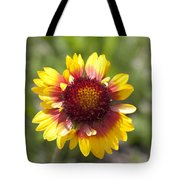 Annual Coreopsis Tote Bag