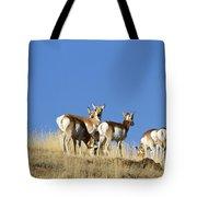 Antelope Herd   #0296 Tote Bag