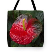 Anthurium Flamingo Flower Beauty Queen Fine Art Photography Print Tote Bag