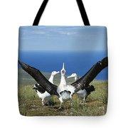 Antipodean Albatross Courtship Display Tote Bag by Tui De Roy