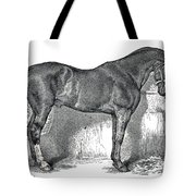 Antique Horse Drawing Tote Bag
