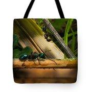 Ants Adventure 2 Tote Bag