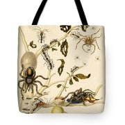 Ants Spiders Tarantula And Hummingbird Tote Bag by Getty Research Institute