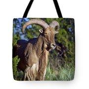 Aoudad Sheep  Tote Bag