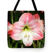Apple Blossom Amaryllis  Tote Bag