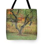 Apple Tree In Autumn Tote Bag