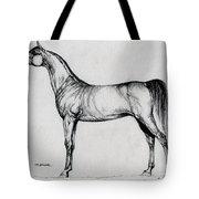 Arabian Horse Drawing 34 Tote Bag