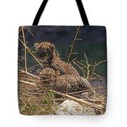 Arabian Leopard Panthera Pardus Cubs Tote Bag