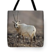 Arabian Oryx Oryx Leucoryx Tote Bag