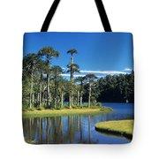 Araucaria Forest Chile Tote Bag