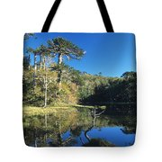 Araucaria Reflections In The Chilean Lake District Tote Bag