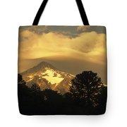 Araucarias At Sunset Tote Bag