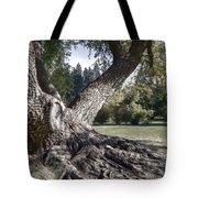 Arboretum Tree Tote Bag by Daniel Hagerman
