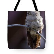 Archway Hummingbird  Tote Bag