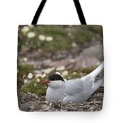 Arctic Tern In Its Nest Tote Bag