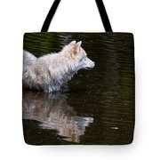 Arctic Wolf In Pond Tote Bag