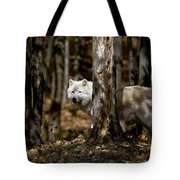 Arctic Wolf Picture 242 Tote Bag