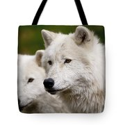 Arctic Wolf Picture 247 Tote Bag