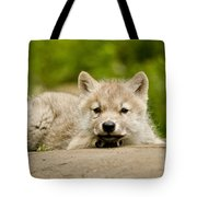 Arctic Wolf Pictures 1118 Tote Bag