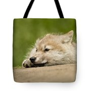 Arctic Wolf Pictures 1121 Tote Bag